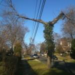 straddling tree